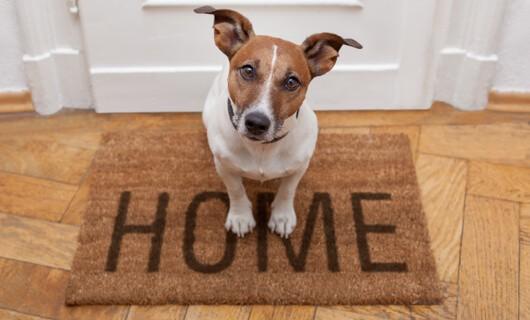 door mat | Carefree Carpets & Floors