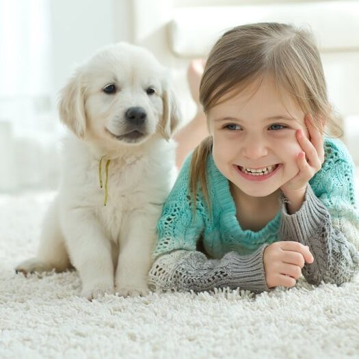 Mohawk carpet pet | Carefree Carpets & Floors